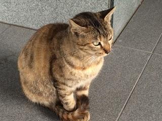 斎場 悠久苑 猫150226.jpg