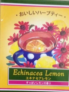 エキナセアレモン131225.jpg