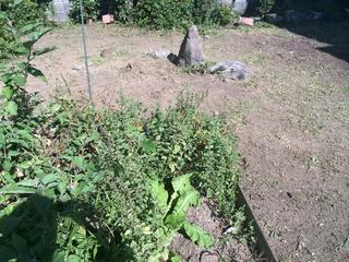 庭の選定140913.jpg