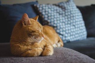 cat-3059075_1920 (1).jpg